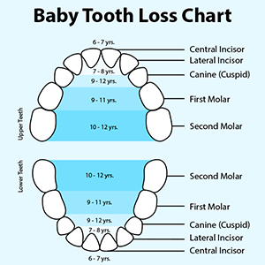 Baby Tooth Loss Infographic