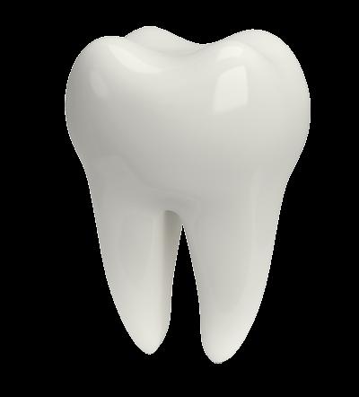 3D Tooth Illustration